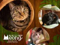 猫と過ごすバリ風民宿Meong楽宿白浜店
