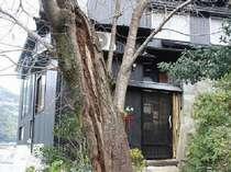 千鳥の荘「風の樹」