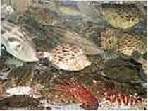 旅館 魚正